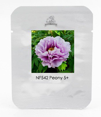 Pivoine Japanese Peony Flower Seeds, 1 Professional Pack, 5 Seeds / Pack