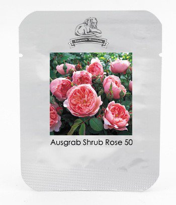 Rare Dark Pink Cupped Flat Double Bloom Rose Shrub Flower Seeds