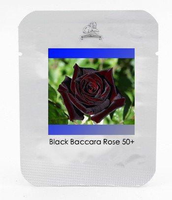 Black Baccara Hybrid Rose Shrub Flower Seeds, Professional Pack,50 Seeds / pack