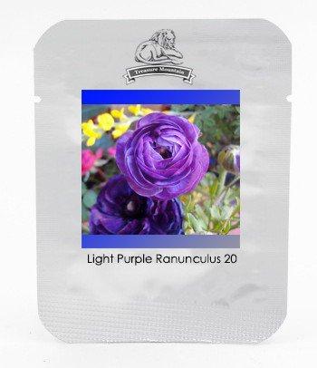 Light Purple Ranunculus Asiaticus Perennial Flower Seeds, Professional Pack
