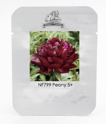 Heirloom 'Miami' Dark Red Burgundy Tree Peony Flower Seeds, Professional Pack