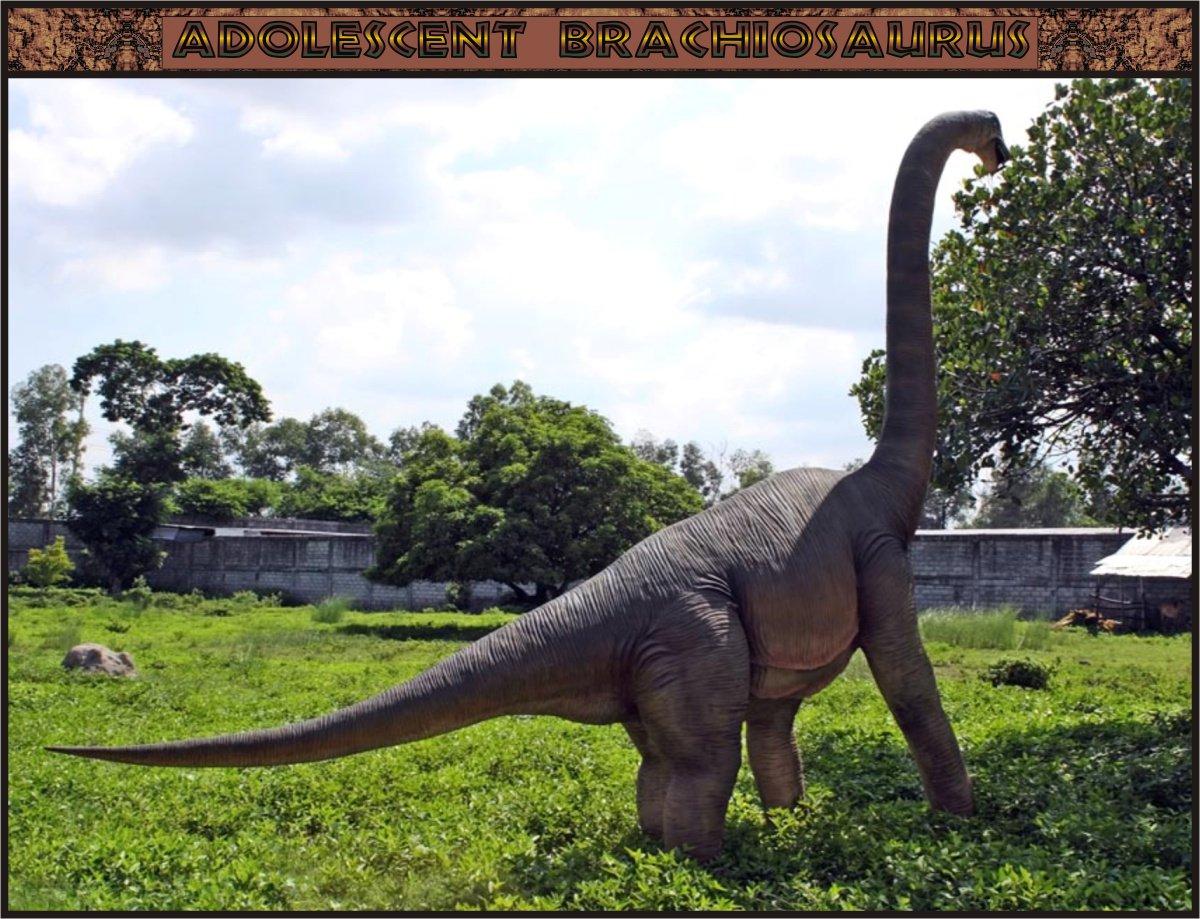 Custom Made Life Size Brachiosaurus Adolescent Dinosaur Statue