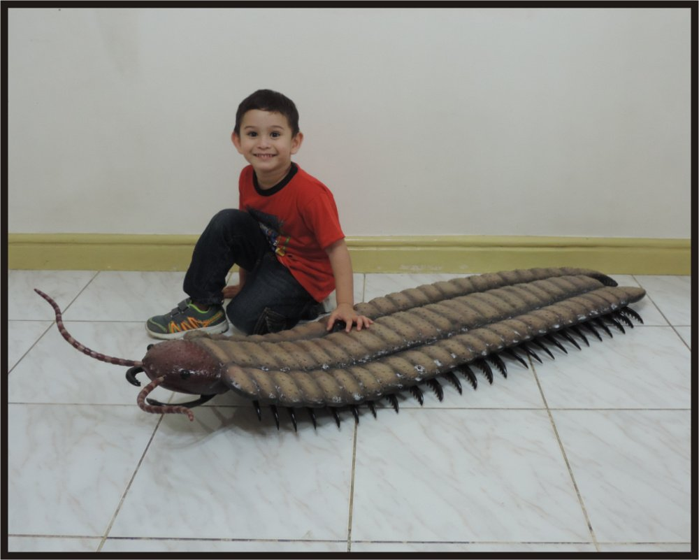 How to Care for a Centipede How to Care for a Centipede new picture