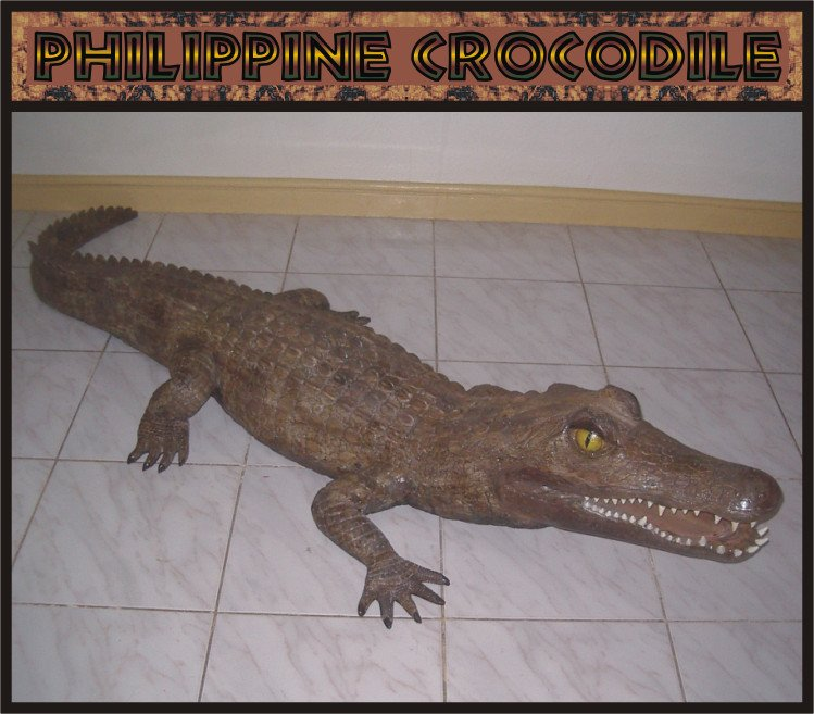 Custom Made Life Size Crocodile 9' Pre-Dinosaur Era Statue