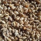 300+ Nassa Seashells Crafts Dove Shells Wedding Favors Scrapbook Fairy Garden