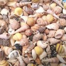 Seashell Mix Shells Beachy Coastal Vase Filler Conch Spiral Clam Snails Ark