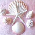 Seashells Mix Shells Beachy Coastal Starfish Scallop Pink Sea Urchin Clam Stripe