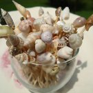 35 Seashell Party Toothpicks Cocktail Picks Wedding Shell Beach Cowrie Conch Ark