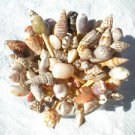 25 Seashell Toothpicks Cocktail Party Picks Wedding Sea Shells Beach Conch Ark