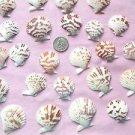 Seashells Pectins Scallops Crafts Shells Sailor's Valentine Lot Beach Wedding