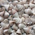 20 Troca Pong Cone Seashell Craft Shell Beach Wedding Shower Beige Trocus Lot