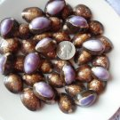 12 Purple Brown Mix Top Cowries Seashells Craft Shell Wedding Sailors Valentine