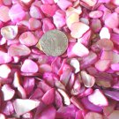 5 oz Pink Crushed Seashells Mosaics Vase Filler Sea Shells Craft Jewelry Abalone