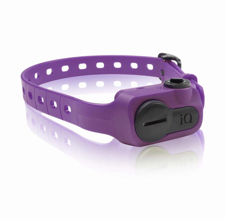 Dogtra iQ No Bark Collar Purple Waterproof Adjustable Vibration System