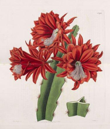 Edwards Botanical Register 33 Volumes