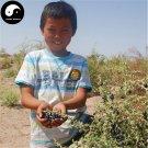 Buy Real Black Goji Berry Tree Seeds 200pcs Plant Chinese Black Wolfberry For Black Goji Berries