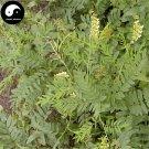 Buy Real Sophora Flavescens Seeds 200pcs Plant Medicinal Herbal Sophora Root For Ku Shen