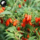 Buy Real Goji Berries Tree Seeds 200pcs Plant A Wolfberry Tree For Goji Berries