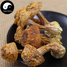 Dried Agaricus Blazei 500g Chinese Medicinal Mushroom Agaricus Brasiliensis