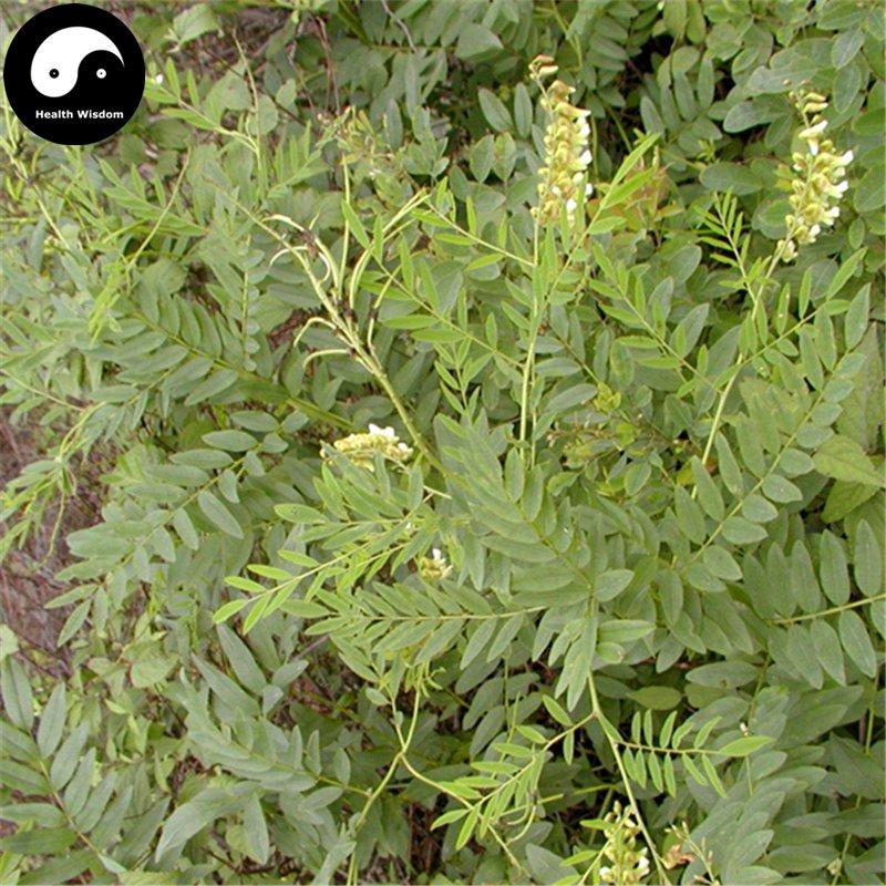 Buy Real Sophora Flavescens Seeds 400pcs Plant Medicinal Herbal Sophora Root For Ku Shen