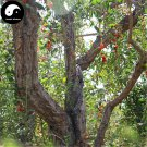 Buy Real Goji Berries Tree Seeds 400pcs Plant A Wolfberry Tree For Goji Berries