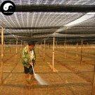 Buy Panax Notoginseng Seeds 100pcs Plant Yunnan Tian Qi Grow Herb Pseudo Ginseng