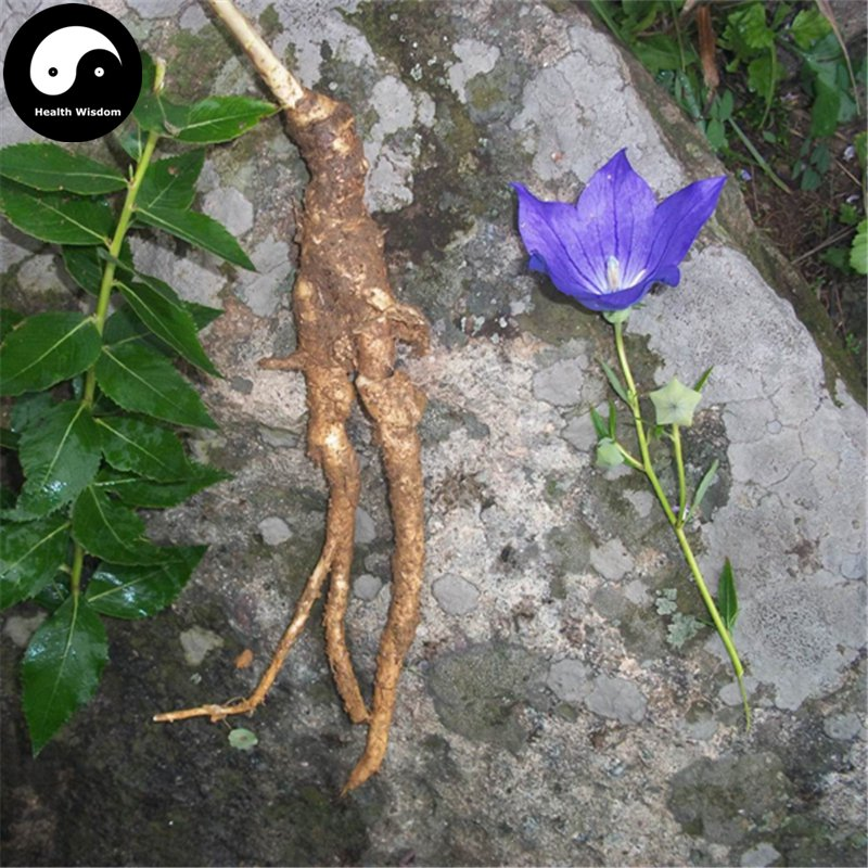 Buy Platycodon Grandiflorus Seeds 400pcs Plant Bellflower For Herb Jie Geng