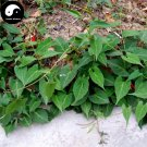 Buy Real Polygonum Multiflorum Seeds 200pcs Plant Herb He Shou Wu For Fo-Ti