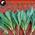 Buy Radix Isatidis Seeds 400pcs Plant Herb Ban Lan Gen For Root Isatis Tinctoria