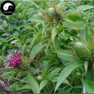 Buy White Atractylodes Seeds 400pcs Plant Baizhu For Root Atractylodes Rhizome