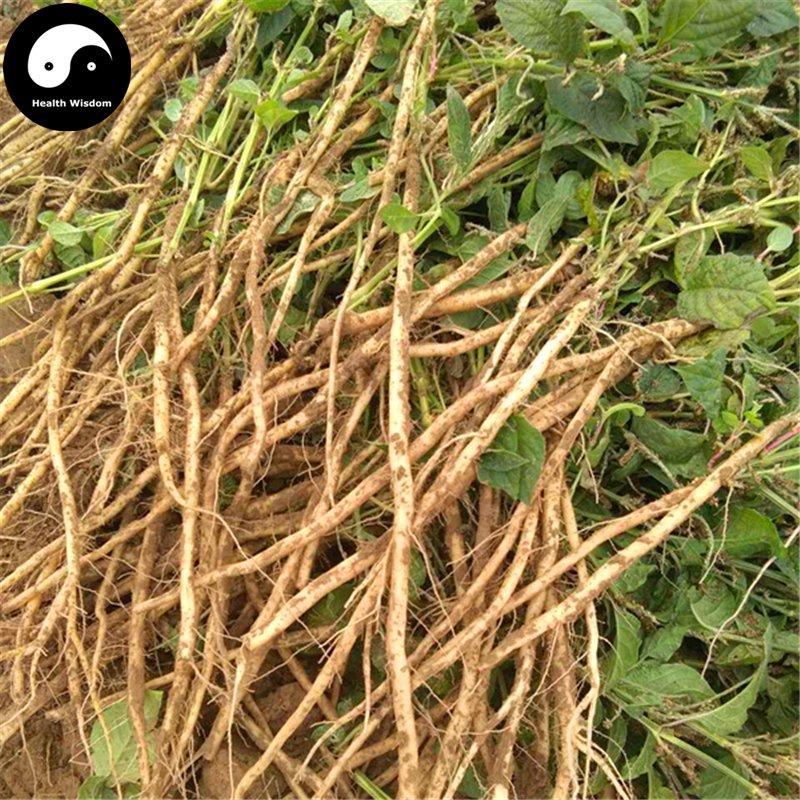 Buy Cyathula officinalis Seeds 400pcs Plant Achyranthes For Root Niu Xi