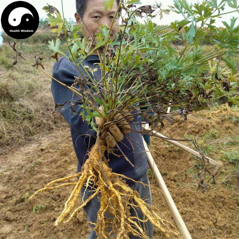 Buy Divaricate Saposhnikovia Seeds 400pcs Plant Saposhnikoviae For Bei Fang Feng