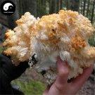 Dried Hericium Erinaceus 200g Chinese Lion's Mane Mushroom Yamabushitake