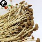 Chestnut Mushroom 500g Chinese Agrocybe Aegerita For Immune Yanagimatsutake