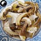 Boletus Mushroom 100g Chinese King Bolete Fungus Dried Niu Gan Jun