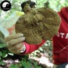 Lucid Ganoderma 200g Dried Chinese Mushroom Ping Gai Ling Zhi Shu She Lingzhi
