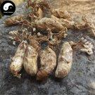 Jin Chan Hua 250g Cicada Fungus Medicinal Mushroom Ophiocordyceps Sobolifera
