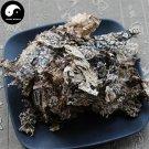 Lao Long Pi 500g Lobaria Kurokavae Yoshim Shi Long Pi Chinese Herb Shi Long Yi