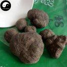 Lei Wan 100g Omphalia Fruiting Body Chinese Herb Mylitta Thunderball Fungus