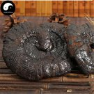 Reishi Mushroom 200g Chinese Wild Black Lingzhi Ganoderma Lucidum Hei Ling Zhi