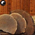 Reishi Mushroom 200g Chinese Wild Lingzhi Ganoderma Lucidum Feng Wo Ling Zhi