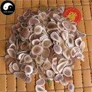 Sika Deer Antler Slice 250g Chinese Energy Tonic Lu Rong Gu Zhi Pian