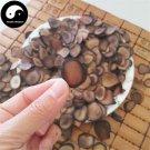 Sika Deer Antler Slice 100g Chinese Energy Tonic Lu Rong Xue Pian