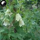 Buy Codonopsis Seeds 400pcs Plant Chinese Tang Shen For Herb Dang Shen