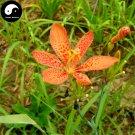 Buy Rhizoma Belamcandae Seeds 200pcs Plant Herb Blackberry Lily For She Gan