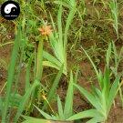 Buy Rhizoma Belamcandae Seeds 400pcs Plant Herb Blackberry Lily For She Gan