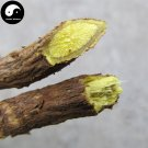 Buy Herb Baical Skullcap Seeds 200pcs Plant Radix Scutellariae For Huang Qin