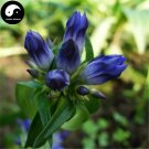 Buy Largeleaf Gentian Seeds 100pcs Plant Gentianae Macrophyllae For Qin Jiao