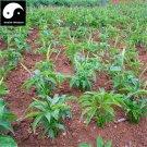 Buy Chinese Araceae Seeds 400pcs Plant Arisaema Heterophyllum For Tian Nan Xing