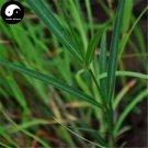 Buy RADIX CYNANCHI PANICULATI Seeds 100pcs Plant Cynanchum For Xu Chang Qing